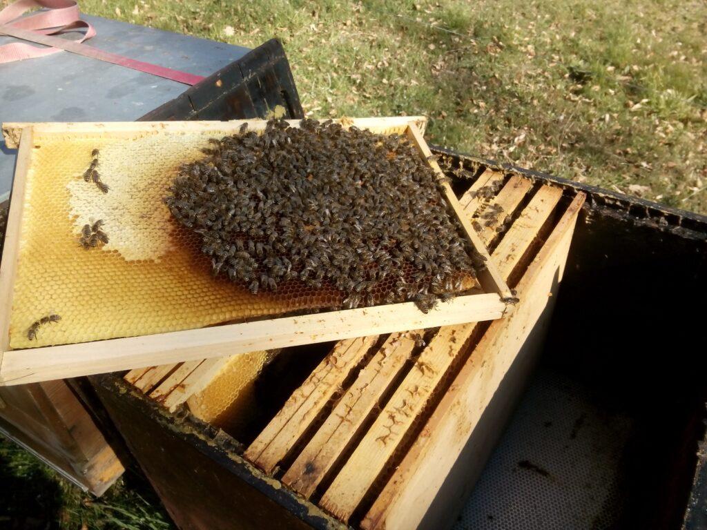 Nucléi hiverné (8 cadres d'abeilles)