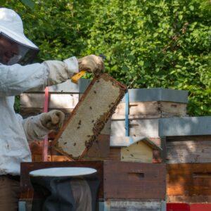 Parrainage d'une ruche 2019 - achat anticipé d'une récolte